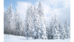 889536-snow-trees-wallpaper
