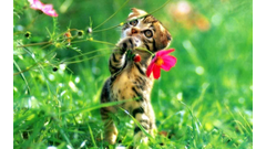 nature_spring_animal_cat_wallpaper_hd_12
