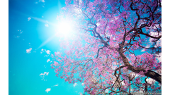 spring-nature-wallpaper-hd-Is-Cool-Wallpapers