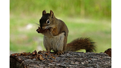 squirrel-animal-cute-image-public-domain-pixabay