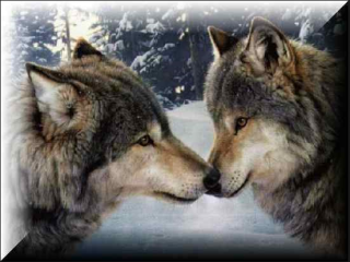 2 wolves.png