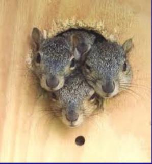 3 squirrels.png