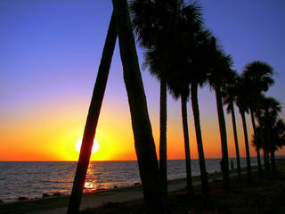 Sunset_Palms.jpg
