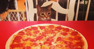 cat-looks-at-pizza.png