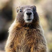 Marmot Trax